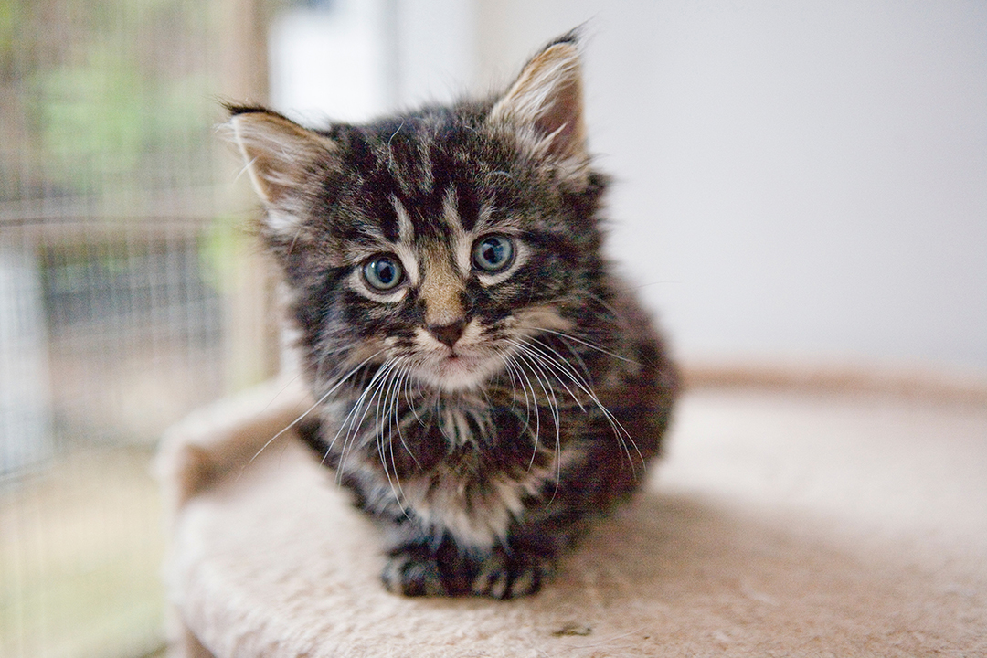 10 things to know before adopting cat